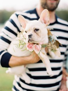 In love with this Frenchie: http://www.stylemepretty.com/virginia-weddings/virginia-beach/2015/01/02/virginia-beach-anniversary-session-with-fur-babies/ | Photography: Michael & Carina - http://www.michaelandcarina.com/