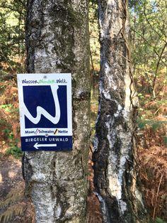 Birgeler Urwald, Wanderweg