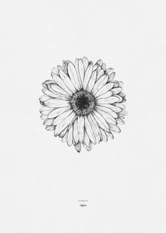 "Flower Drawing Discover Printables - Gerbera Drawing of the gerbera flower by inkylines. ""Because of you everything is more beautiful"" thats where the gerbera stands for. Gerbera Daisy Tattoo, Gerbera Flower, Daisies Tattoo, Daisy Flower Tattoos, Small Daisy Tattoo, Tattoo Flowers, Watercolor Daisy Tattoo, Aster Flower, Flower Bouquets"