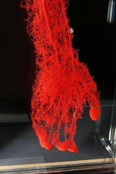 The Blood Vessels Of A Hand