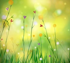 Spring background with flowers Photoshop World, Free Photoshop, Spring Images, Spring Pictures, Wallpapers For Mobile Phones, Mobile Wallpaper, Wallpapers Android, Nature Vector, Phone Photography