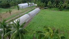 First we farm! And we are thankful we survived the typhoon. Did a quick ocular for damages and everything is intact. We cant find Buddy our farm dog though . . . #farm #farming #greenhouse #green #aerial #drone Farm Dogs, Aerial Drone, Farming, Sun Lounger, Survival, Thankful, World, Green, Outdoor Decor