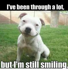Yeah, im still smiling. BUT THIS DOG IS THE CUTEST THING. I JUST