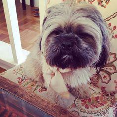 #doggie not feeling well #getwellsoon #puppy