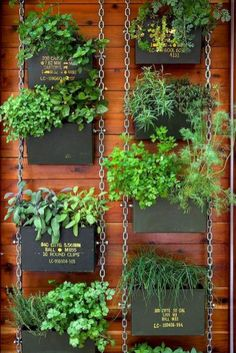 Vertical gardening inspiration (12)