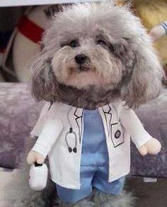 Cute Doctor Pet Costume