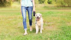 5 ways to make your pet's health care costs affordable. Caring for your best friend without breaking the bank