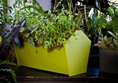 Shop the Garden Tote Garden Container from Loll Designer, available in 10 bold colors. Made from recycled materials and looks great indoors or outdoors! Outdoor Planter Boxes, Planter Pots, Different Plants, Milk Jug, Go Green, Recycled Materials, Container Gardening, Garden Tools, Recycling