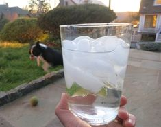 Dinner: A Love Story Gin & Tonics: The DALS Way