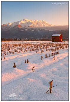 snowy vineyards, Tramonto, Italy,