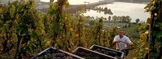 Rhône Wine No Longer a Tale of Two Valleys The traditional demarcation line between the northern and southern Rhône valleys is blurring as producers embrace the entire region.