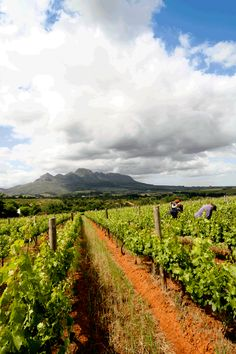 Vriesenhof Stellenbosch, South Africa... What A Wonderful World, Wonderful Places, South Afrika, Wine Tourism, Cape Town South Africa, Out Of Africa, Most Beautiful Cities, Holiday Destinations, Wine Country
