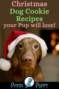 christmas cookies homemade Weihnachtspltzchen 9 scrumptious dog Christmas cookie recipes - including dog cookies with icing, sugar cookies for dogs, dog cookies with pumpkin and peanut butter + 6 more! Healthy Sugar Cookies, Ginger Cookies, Sugar Cookies Recipe, Peanut Butter Cookies, Dog Cookie Recipes, Dog Biscuit Recipes, Dog Food Recipes, Healthy Recipes, Christmas Dog Cookie Recipe