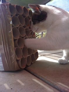 Cat toy from tp roll
