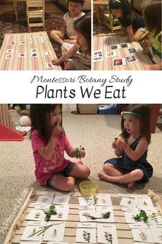Montessori Botany Study: Plants We Eat – MOMtessori Life Montessori Science, Montessori Practical Life, Montessori Homeschool, Montessori Toddler, Montessori Elementary, Homeschooling, Toddler Learning Activities, Preschool Activities, Kids Learning