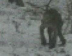 "Strange ""Troll"" Creature Photographed in Rural Pennsylvania"