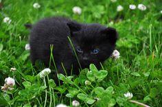 Auffälliges Verhalten bei Katzenbabys...