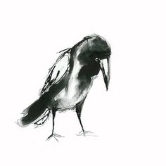 Suzy Sharpe's Contemporary Drawings Of Birds
