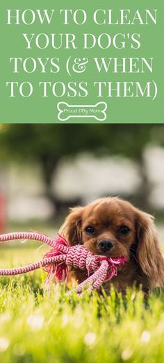 How To Clean Your Dog's Toys and When To Toss Them | Cleaning Hacks | Dog Tips |