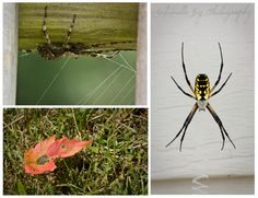Of Spiders And Fall Beginnings