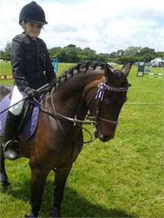 All rounder/ show pony - For sale http://www.equineclassifieds.co.uk/Horse/for-sale-listing-840.aspx#.U6Ffe0ATCZY