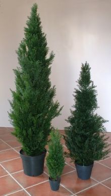 Zone D - Fake Conifer - £12