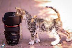 500px в ИСО » красивые фотографии, невероятные StoriesBest фото 2013 года: кошки…
