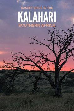 Sunset drive in the Kgalagadi Transfrontier Park, Kalahari, Southern Africa