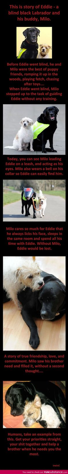 Awwww the sweetest story ever!
