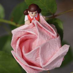 https://flic.kr/p/tuh8Uo | これ、水をあげなくても咲くの | Kawasaki Rose, sequence developed by Kevin Hines