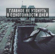 Как же я все таки обожаю наш Калининград, и группу в вк, создающую такие прекрасные пикчи))) Кстати, китов я тоже ооооюооожааю!!!😍 😊
