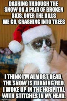 Do you love Grumpy cat. If you do, These Grumpy cat Memes work for you.These Grumpy cat Memes work are so funny and humor.Read This Top 23 Grumpy Cat Memes Wor Grumpy Cat Quotes, Grumpy Cat Humor, Cats Humor, Funny Cats, Funny Animals, Cute Animals, Funniest Animals, Animal Memes, Christmas Cats