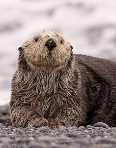 Sea Otter<<<I see no otter here.