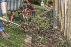 Unkraut vergeht doch – und zwar auch ohne Roundup und andere Herbizide. Hier lesen Sie, wie Sie die lästigen Wildkräuter im Garten umweltschonend bekämpfen können.