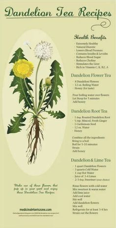 Delicious Dandelion Tea Recipes: Be sure that you source Organic or Wild Crafted. - Delicious Dandelion Tea Recipes: Be sure that you source Organic or Wild Crafted Herbs that aren& - Natural Diuretic, Natural Cures, Natural Healing, Natural Foods, Holistic Healing, Natural Treatments, Natural Beauty, Natural Oil, Holistic Wellness