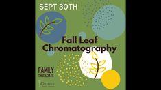 Autumn Leaves, Color Change, Fall, Autumn, Fall Leaves, Fall Season, Autumn Leaf Color