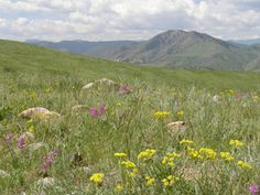 Best Places for Trail Running Near Denver
