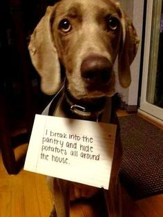 Bad day? Enjoy these adorable pups and their naughty confessions! This guy, who just loves potatoes! This girl who just wanted to feel pretty! This lit