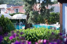 Thermal pool @ Hotel Internazionale Ischia - info@hotelinternazionaleischia.com, Via Acquedotto 33, 80070 Barano d'Ischia NA,  Tel: +39081901315 Outdoor Swimming Pool, Swimming Pools, Thermal Pool, Hotel, Patio, Island, Outdoor Decor, Plants, Outdoor Pool
