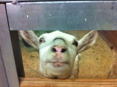 Joy at The Gentle Barn