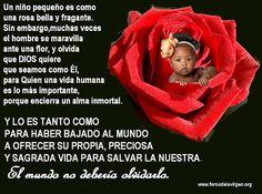#REFLEXIONES  EN UN MUNDO QUE PARECE DESPRECIAR LA INOCENCIA, Y MUCHAS VECES LOS MATA – Un niño pequeño es como una rosa bella y fragante. Sin embargo, muchas veces el hombre se maravilla ante una flor y olvida que DIOS quiere que seamos como Él, para Quien una vida humana es lo más importante, porque encierra un alma inmortal. Y LO ES TANTO COMO PARA HABER BAJADO DEL CIELO A OFRECER SU PROPIA, PRECIOSA Y SAGRADA VIDA PARA SALVAR LA NUESTRA. El mundo no debería olvidarlo.