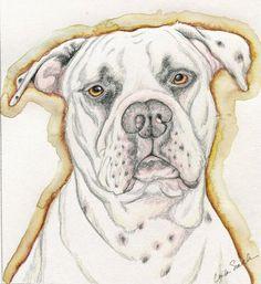 White American Bulldog Pet Dog Art Portrait Pencil Print from Drawing Carla Smale White American Bulldogs, American Bulldog Puppies, Bulldog Drawing, Animal Cutouts, Animal Drawings, Dog Drawings, Drawing Animals, Easy Drawings, Pencil Drawings