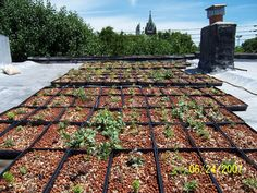 DIY: A Green Roof Grows In Brooklyn maybe i should try this