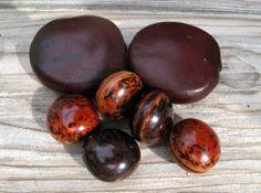 7 Lucky Sea Beans Assortment  Good Luck Drift by SeaSideStore, $3.50