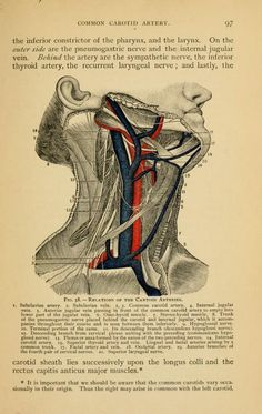From Luther Holden, John Langton, and Addinell Hewson's Holden's anatomy: a manual of the dissection of the human body (1901).