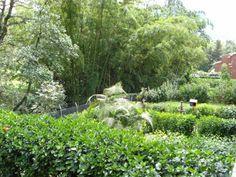 Green backyard in Envigado Vineyard, Backyard, Green, Plants, Pictures, Outdoor, Colombia, Photos, Outdoors