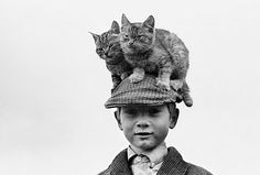 * Vintage Cat Hat * everyone should have one Photo Vintage, Vintage Photos, Vintage Photographs, Crazy Cat Lady, Crazy Cats, Photo Chat, Cat Hat, Cat People, Vintage Humor