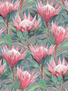 Pink Painted King Proteas on grey Art Print by micklyn - X-Small Protea Art, Protea Flower, Botanical Art, Botanical Illustration, Rose Gold Fabric, Artichoke Flower, Pink Painting, Grey Throw Pillows, Floral Drawing