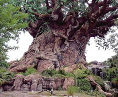 The Tree of Life ,Animal Kingdom ~ Orlando, Florida. The animals don't eat each other it was so amazing!