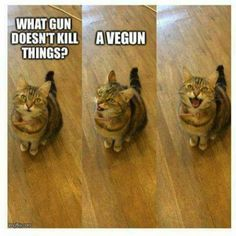 28 trendy cats quotes humor so true Cat Puns, Cat Memes, Funny Memes, Hilarious, The Animals, Funny Animals, Adorable Animals, Vegan Facts, Animal Rights